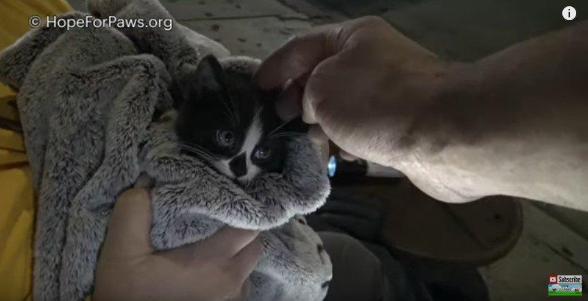 タオルにくるまった子猫