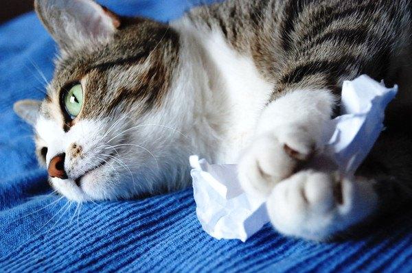 紙を持つ猫