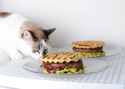 ハンバーグサンドを食べようとする猫