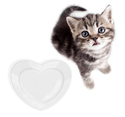 空のお皿を前に見上げる子猫