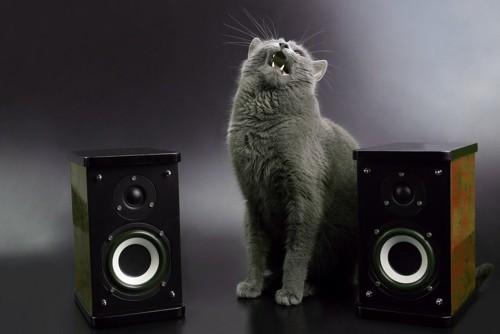 スピーカーの間に立つ猫