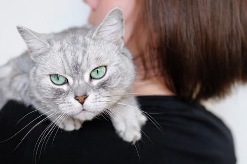 人の肩に乗る不満げな猫