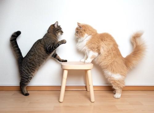 向かい合うオレンジ長毛の猫とグレー縞の猫