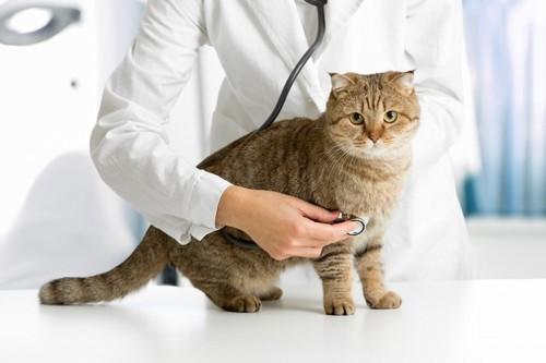 診察をされる猫