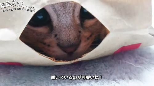 紙袋の穴からのぞく猫