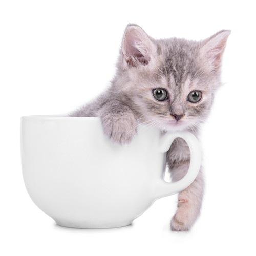 カップに入っている猫