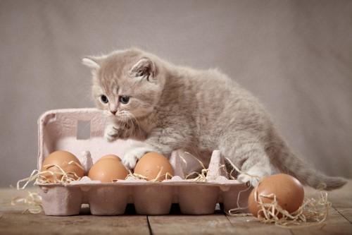卵のパックの上に乗ろうとしている子猫