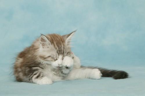 前足で目をこすっている猫