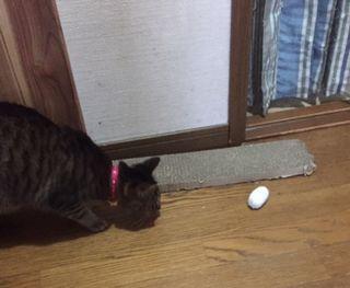 猫がボールをじっと見て、飛びつこうとしている