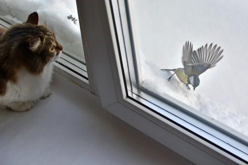 鳥を見ている猫