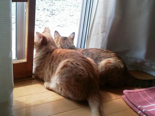外を眺める2匹