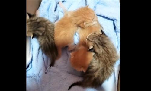 ダンボールに入った4匹の子猫