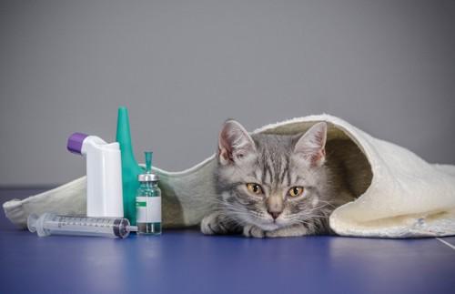 タオルに隠れている仔猫