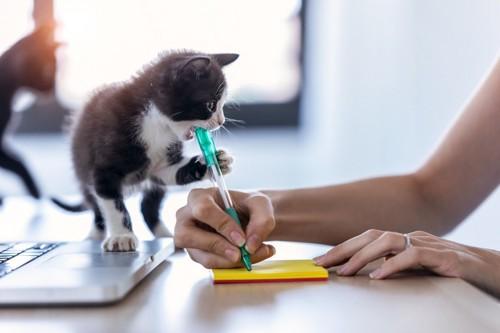 仕事の邪魔をする子猫