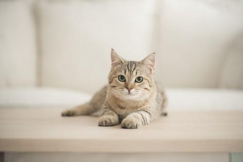 家の中にいる猫