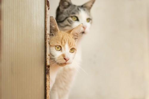物陰から見ている2匹の猫