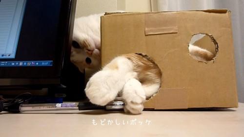 ペンを取ろうとする猫