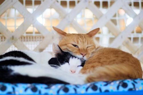 くっついた猫たち