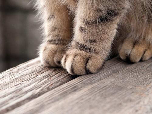 座った猫の足元アップ