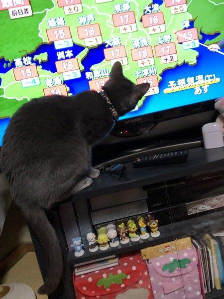 テレビを見るひじきちゃん