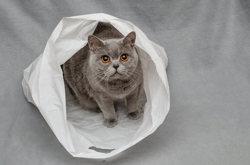 ビニール袋の中に入って座る猫