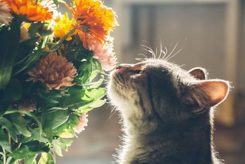 花のにおいを嗅ぐ猫