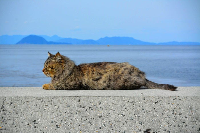 島の寝ている猫