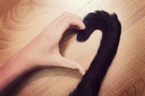 猫のしっぽと人の手で作ったハート