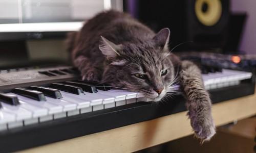 ピアノの鍵盤の上でくつろぐ猫