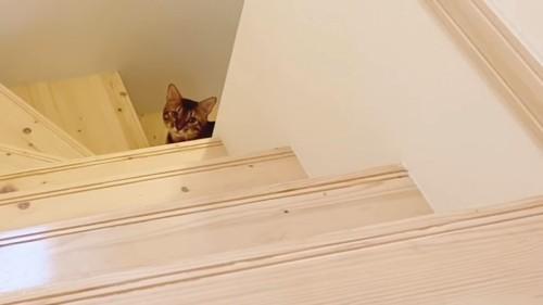 階段の途中で見上げる猫の顔