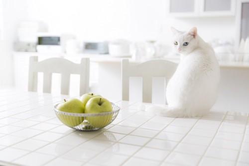 キッチンのテーブルに乗る白猫