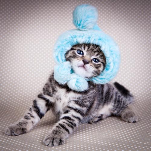 ニット帽をかぶっている子猫