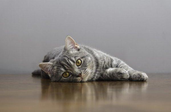 ぐったりの猫
