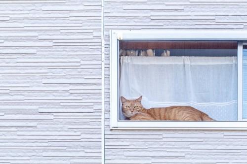 窓辺から外を眺めている猫