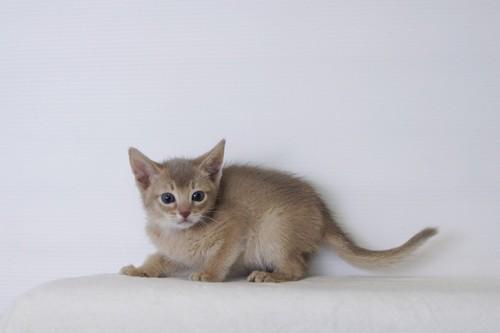 体を小さくする子猫
