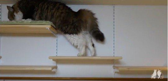 ボス猫がそっと登る