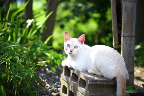 御誕生寺に住む猫