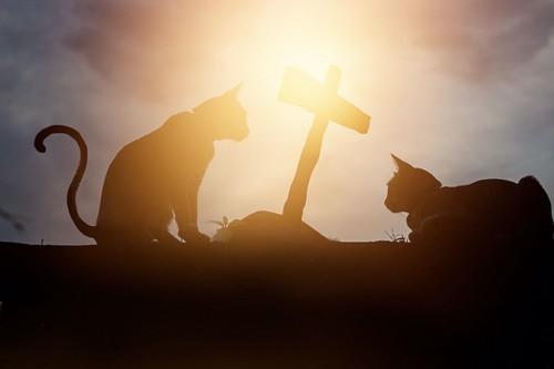 夕陽の中で十字架のそばにいる二匹の猫