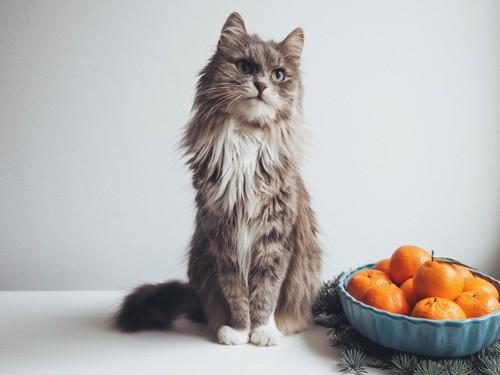 猫とみかん