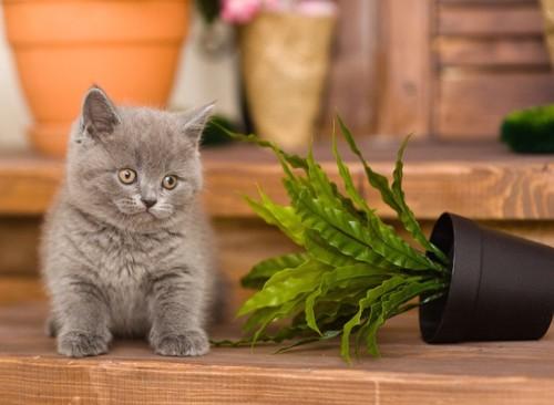 倒れた観葉植物と子猫
