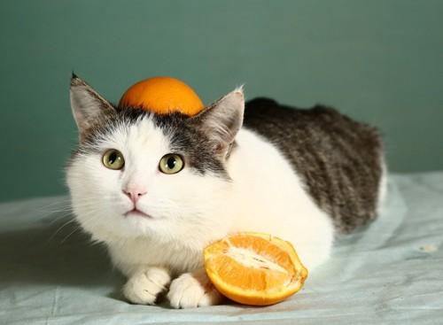 頭にオレンジ猫