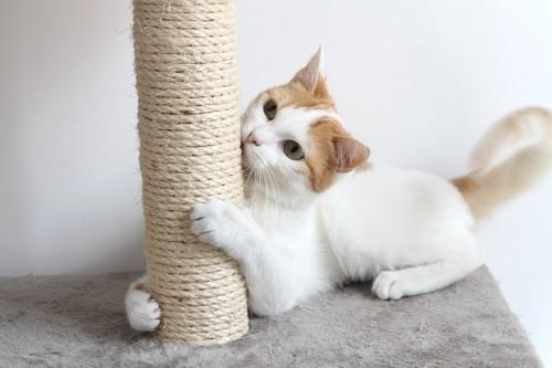 爪とぎをかじる猫