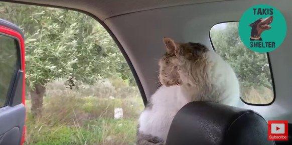 開いたドアの外を見る猫