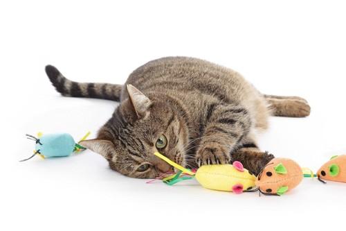 おもちゃであそぶ猫