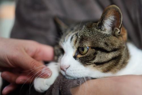 飼い主に抱っこされて憂鬱そうな猫