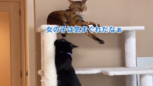 爪とぎをする黒猫