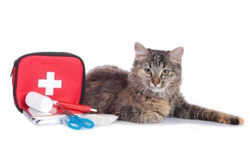 救急セットと猫
