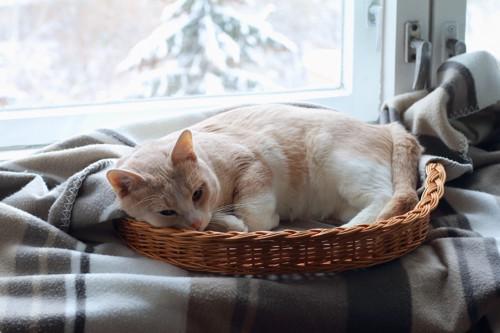 窓際のベッドで寝る猫