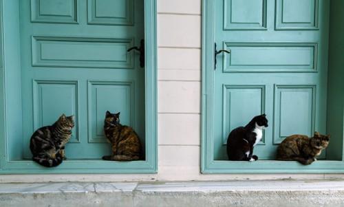 玄関の前に居る4匹の猫