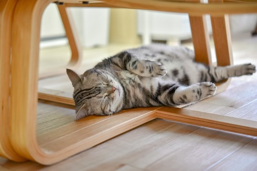テーブルの下で眠っている猫